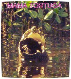 mama-tortuga, Mama Tortuga, Bilingual families, familias bilingues, local events, South Florida, Sur de la Florida, eventos locales.