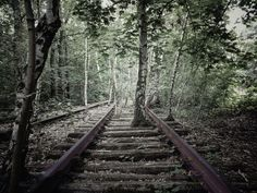 """The """"Schöneberger Südgelände"""" is an old switch area. Since the 1950s nature reccovers the tracks. Today it is a unique preserve area in #Berlin."""