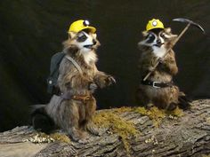 Wall Drug Raccoons    Production by Sally Corporation
