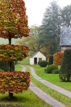 Autumn colours of the topiary at Allt-y-bela. Beech used as topiary-- nice textural contrast. Fall Topiaries, Topiary Garden, Topiary Trees, Garden Paths, Garden Art, Garden Landscaping, Balcony Gardening, Fairy Gardening, Organic Gardening