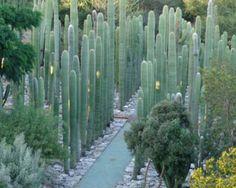 Cactus maze
