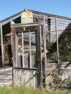 Abandoned greenhouse, Larkspur