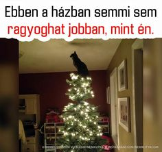 Me Too Meme, Funny Animals, Jokes, Xmas, Lol, Holiday Decor, Christmas, Laughing So Hard, Chistes