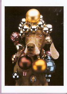 Weimaraner Christmas