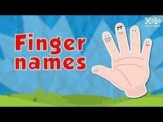 (49) Finger Names - Nombre de los dedos de la mano en inglés - Videos Aprende - YouTube