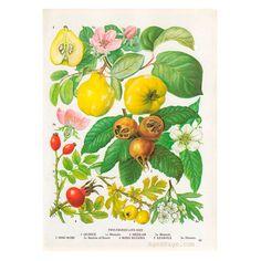 Kitchen+Decor+Vintage+Botanical+Print+Wall+Art+by+AgedPage+on+Etsy,+$10.00