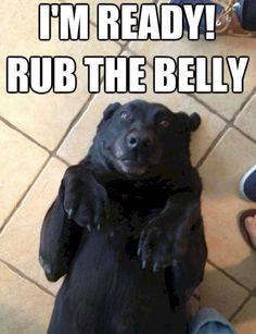 He looks like a bear