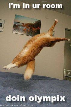 olympic cat