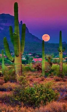 Sonoran Desert near Chandler, as moon rolls down mountain