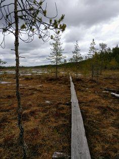 Patvinsuo national park, Lieksa, Finland