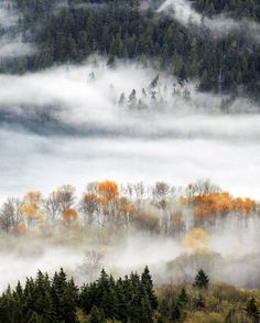 Gloria King, Trees in the Mist. 3rd Place, Trees, Woods & Forests. - Picture: Gloria King