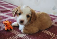 Cute puppy and dog - http://www.1pic4u.com/blog/2014/11/16/suesse-hundebabys-139/