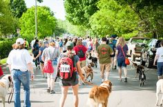 """Look at all the people enjoying a 5K in Lawrence KS ...... with their dogs!! This race is held by the Lawrence Humane Society and is called the """"Paw Valley 5K""""  #brownfootbearphotography #brownfootbear #photography #gunnarwilliamsphotography #gunnwilliams #dog #dogs #dogsofinstagram #dogoftheday #dogphotography #woof #withdog #instadogs #art #dogart #mustlovedogs #youhadmeatwoof #petphotography #KansasCity #kc #Kansas #ks #kansasphotos #love #LawrenceKS #lfk #fitness"""