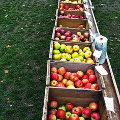 Because apple picking is a can�t-miss autumn ritual. | 39 Reasons Living In Maine Ruins You For Life