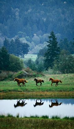 Three horses racing along the still lake - the reflection in the mountain valley is like a mirror of the mares or stallions Running Free. - DdO:) - http://www.pinterest.com/DianaDeeOsborne/dido-reflections/ - DiDoREFLECTIONS.com DiDo REFLECTIONS. Photo Credit: National Geographic The Noble Horse DVD Exclusive. Pinned via Jan Bromage's HORSES board.
