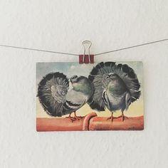 Pigeon fanciers.
