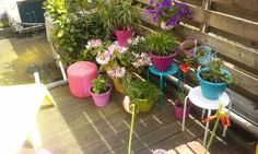 Colourful pots and plants. Garden on my balcony.