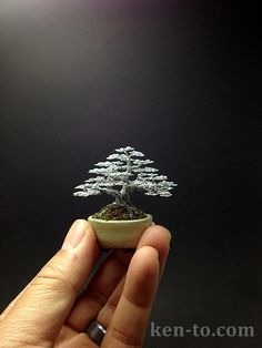 Tiny wire bonsai! Mame wire bonsai tree sculpture by Ken To by KenToArt.deviantart.com on @deviantART