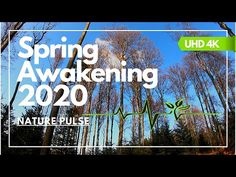 Spring in Full Effect 2020 - Slovenija Forest Ultra HD Supermoto Racing, Travel Captions, In Full Effect, First Day Of Spring, Outdoor Recreation, Travel Aesthetic, Go Outside, Australia Travel, Beach Trip