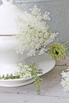 VIBEKE DESIGN: Sommerens delikate og dekorative...finnes i grøftekanten!