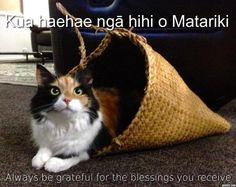whakatauki - Google Search Always Be Grateful, Classroom Environment, Craft Work, Infants, Kiwi, Proverbs, Teaching Resources, Toddlers, Preschool