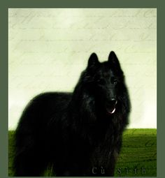 """The Cù Sìth of Scottish mythology is an enormous, otherworldly hound, said to haunt the Scottish Highlands. Roughly the size of a large calf, the Cù Sìth was said to be black in color with shaggy fur and a long braided tail. The Cù Sìth was feared as a harbinger of death and would appear to bear away the soul of a person to the afterlife (Grim Reaper). Cù Sìth literally means """"barrow hound""""."""