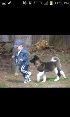 Akita #dog #akita #animal