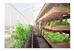 The food-farm-tower is based on two main objectives: to maximize productivity and diversity of the crops by optimizing solar exposure, and provide flexibility so that the system can be integrated into a mixed-use building.