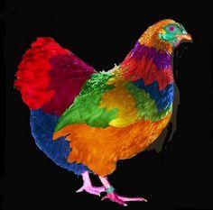 rainbow chicken   rainbow-chicken.jpg