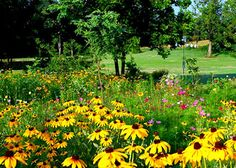 planting wildflowers- instructions for each season