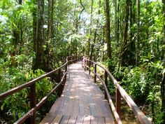 projeto parque ecologico - Pesquisa Google