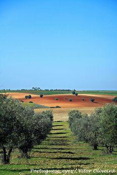 Arredores de Marmelar - Portugal - Marmelar é uma antiga freguesia portuguesa do concelho da Vidigueira, estando hoje integrada, como mero lugar, na freguesia de Pedrógão (Vidigueira).