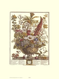 Twelve Months of Flowers, 1730/December