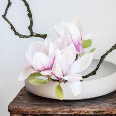 Ikebana de Magnolias, vase à Moribana Géraldine K., céramiste (www.geraldine-k-ceramiste.com) Ikebana, Magnolias, Succulents, Vase, Inspiration, Plant, Magnolia Trees, Biblical Inspiration, Succulent Plants