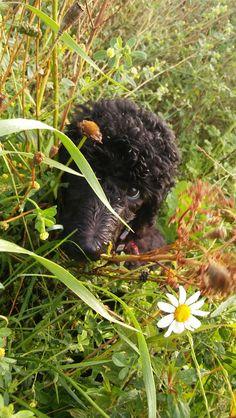 Berta✌😍🌾my little cutie dog