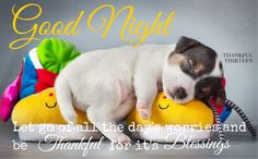 px puppy backround free for desktop by Beasley Chester Cute Good Night, Good Night Gif, Good Night Sweet Dreams, Good Night Image, Good Night Quotes, Day For Night, Good Night Prayer, Good Night Blessings, Good Night Friends