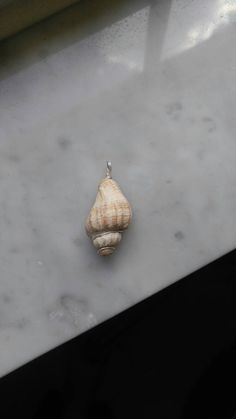 Mighty Conch Republic  Named after the historic Conch Republic of Key West, this shell was a found treasure at Bathtub Reef on Hutchinson Island, FL.  This shell is beautiful all on its own so it is simply wrapped in silver wire with an attached bail. Ready to be added to your chain of choice!  The Mighty Conch Republic measures just short of 1 3/4 including the bail. All pendants are double wrapped to help protect them on their journey to you.