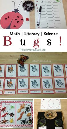 Bugs Math Literacy and Science Montessori Activities Best Picture For Arthropods chart For Science Montessori, Montessori Classroom, Science Activities, Montessori Education, Homeschooling Resources, Curriculum, Math About Me, Math Literacy, Play Based Learning