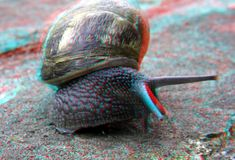 3d Photo, Snail, Red, Pictures, Animals, Photos, Animales, Animaux, Animal