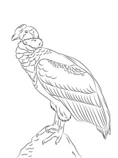 Click To See Printable Version Of Perched Andean Condor Coloring Page