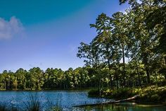 Homes County State Park: Mississippi