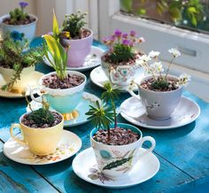 Vintage cups & saucers & alpine plants for a pretty desktop garden