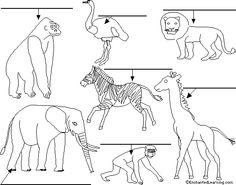 Skelett von Hund Katze Pferd | Vorschulmaterial | Pinterest | Hund ...