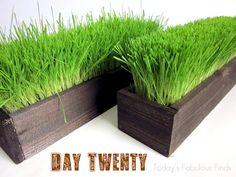 Todays Fabulous Finds: Three Easter Wheat Grass Centerpieces and an Update Grass Centerpiece, Centerpieces, Wheat Grass, Sweet Home, Herbs, Outdoor Decor, Flowers, Diy, Crafts