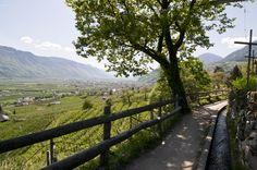 Auf der Meraner Waalrunde hat man stets den Blick ins Tal.
