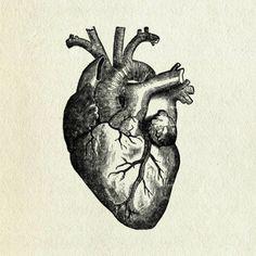 anatomical drawing of human heart - Google Search