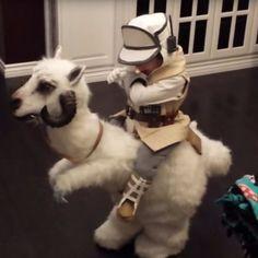 Homemade Star Wars Tauntaun Costume