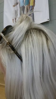 My White hair.   Platinum blonde.  Ash toner. no photo shop. I use 40 volume with Matrix V-light bleach. I use Loreal excellence cream in pale ash blonde and mix it with a 10 vol for the toner. Instant white!