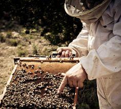 organic beekeeping  5 Reasons to Befriend Your Local Beekeeper