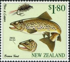"Brown Trout (Salmo trutta trutta), ""Hare & Copper"""